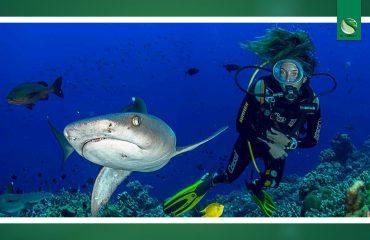 Francesca Reinero Premio Rapalla Mostro sarai tu squali La festa del mare